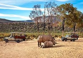 Safari at Private Aquila Game Reserve