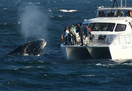 Hermanus and Southern Right Whale Route Tour