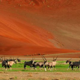 15 DAY CAPE TOWN & SOUTHERN NAMIBIA